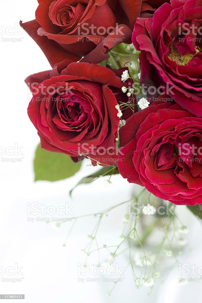 Red Roses and white Gypsophila stock photo