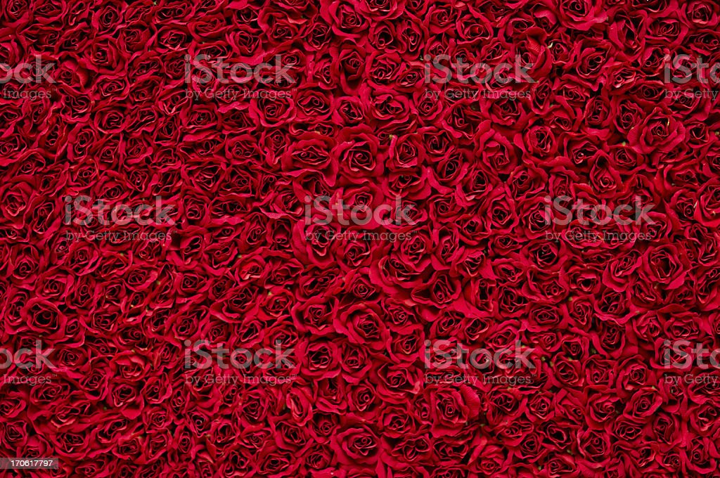 Red roses background stock photo