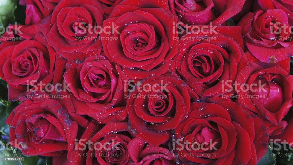 Red roses background royalty-free stock photo