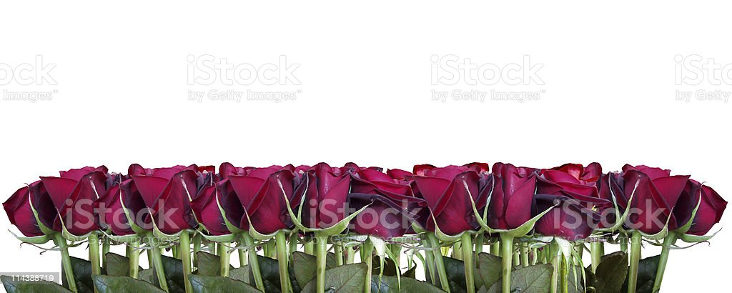 Red roses border stock photo