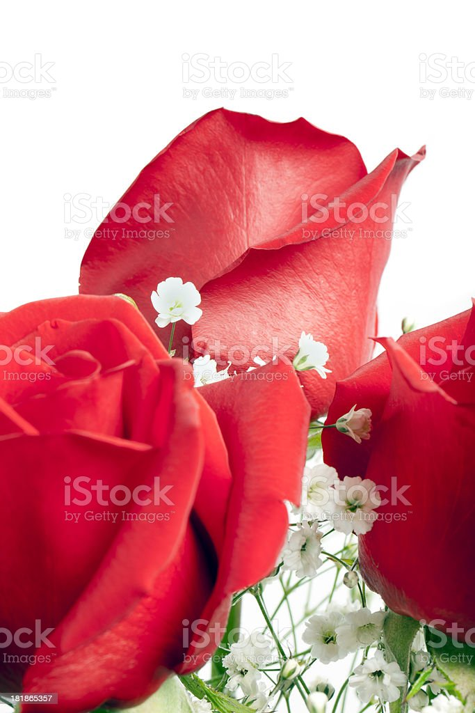 Red roses bouquet in white background royalty-free stock photo