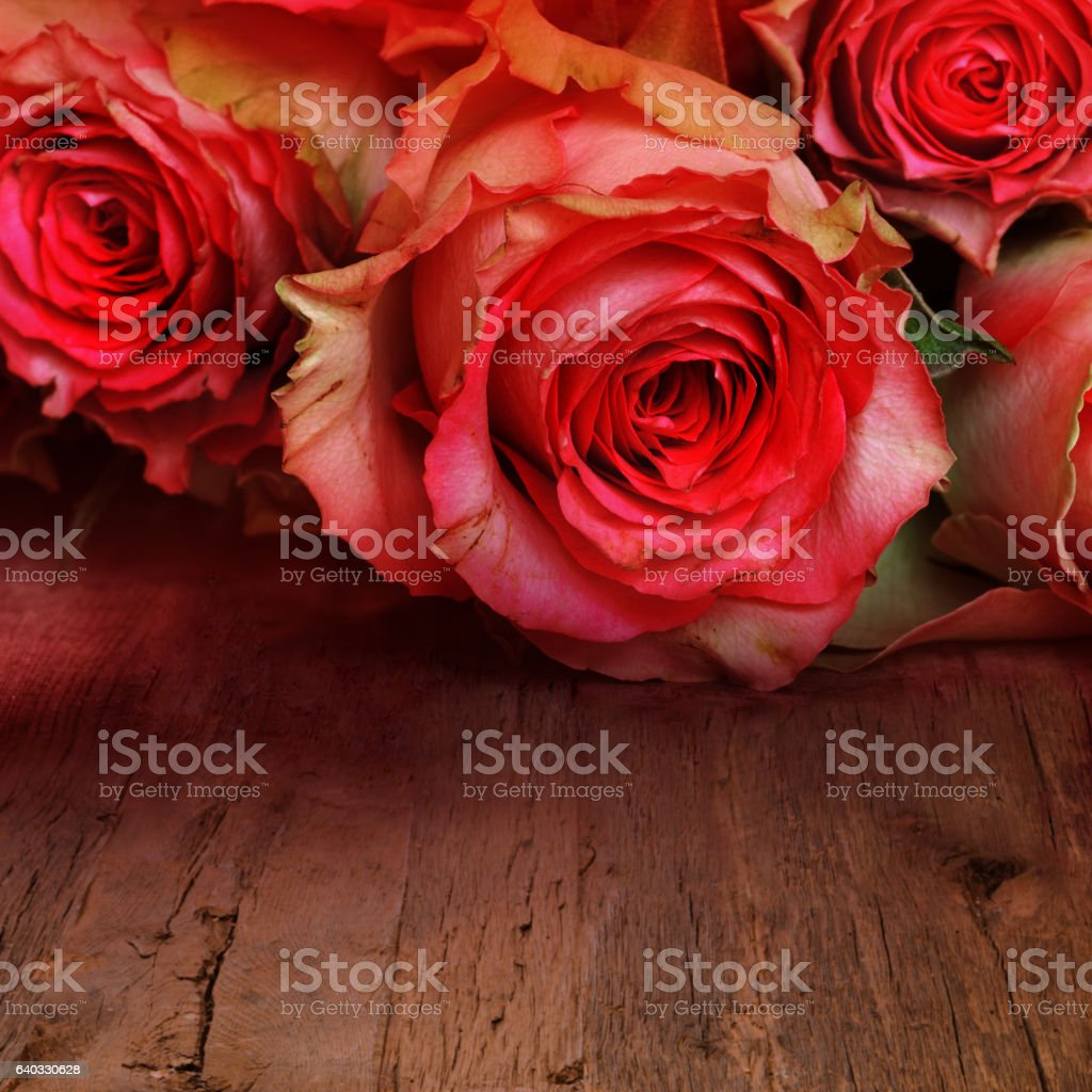 Red roses for a love message stock photo