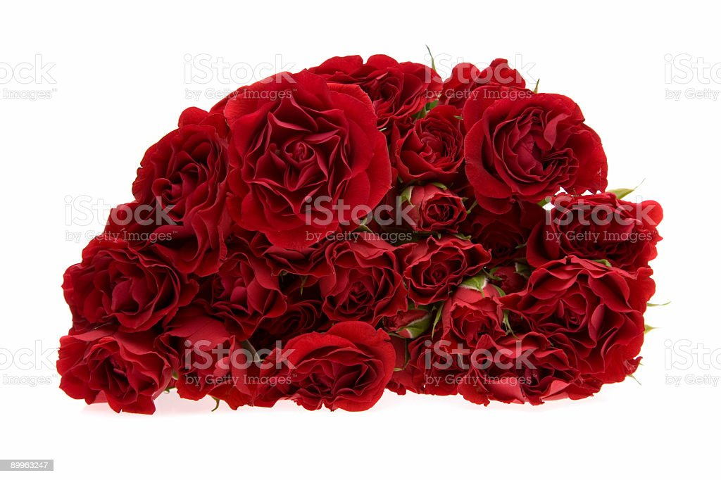 Red Roses / Front view stock photo