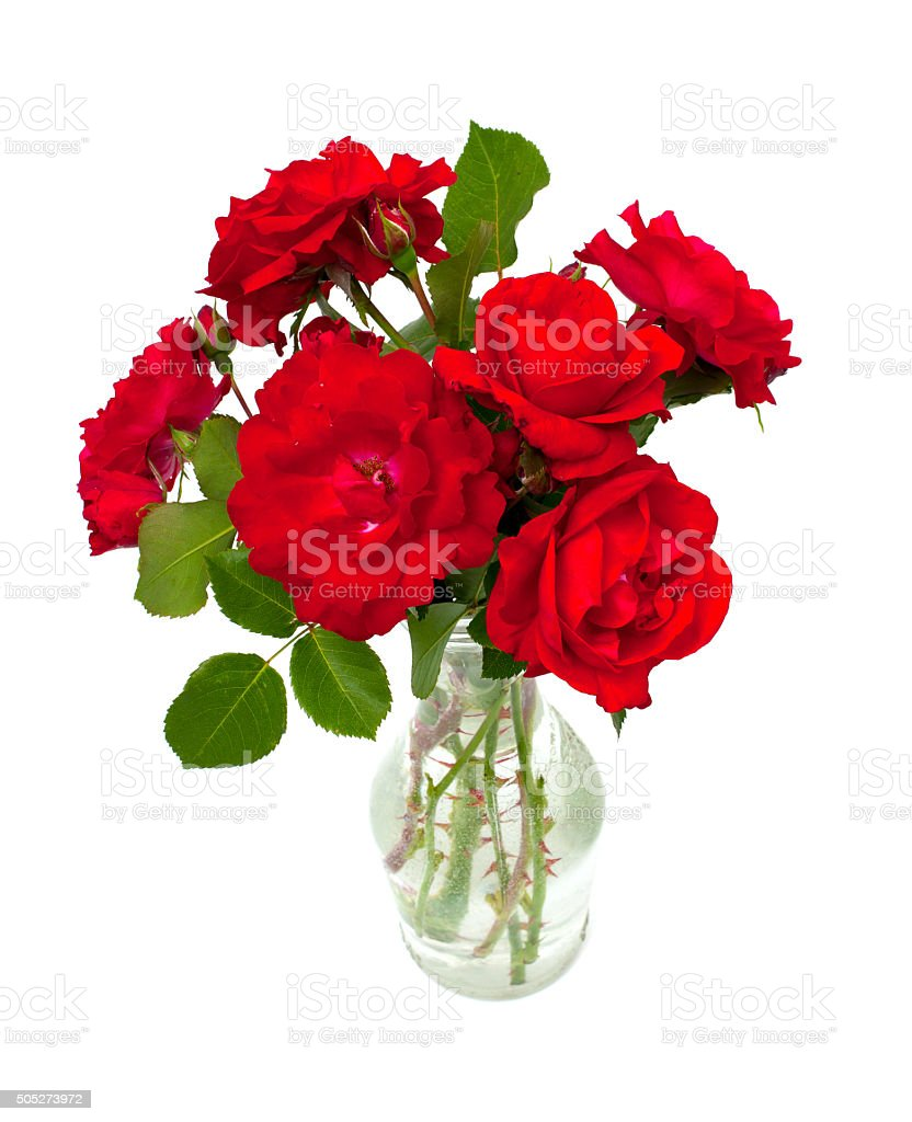 red roses in a glass vase stock photo
