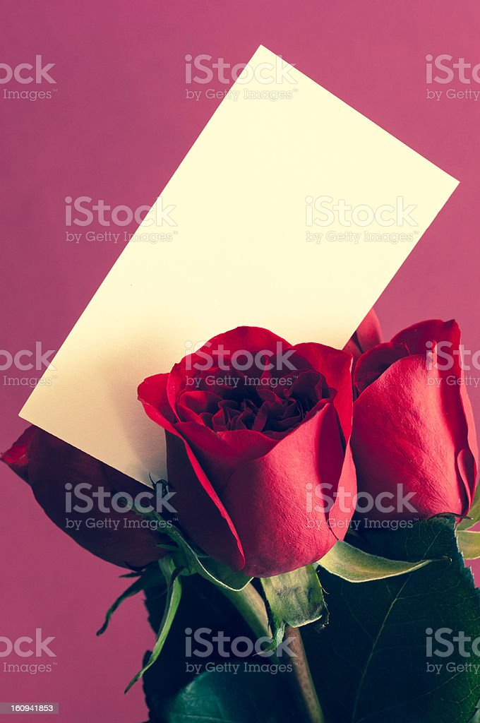 Red Roses Invitation royalty-free stock photo