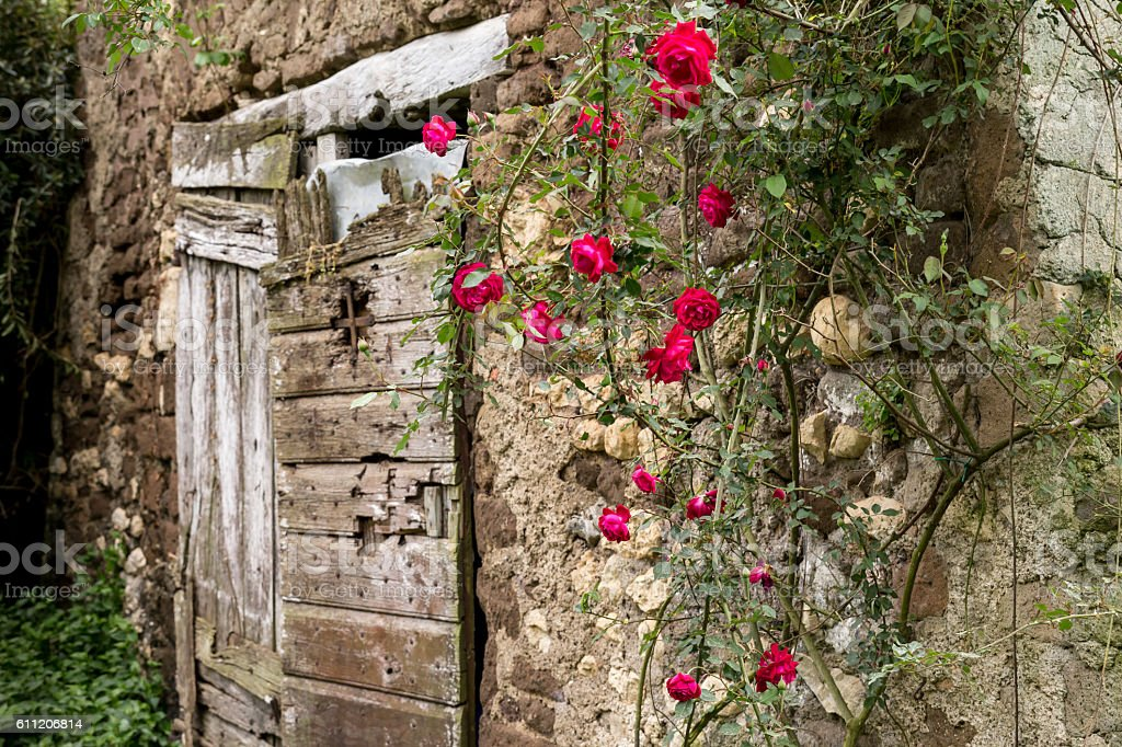 Red roses, old doors stock photo
