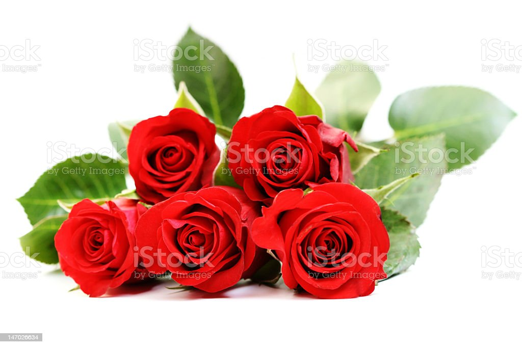 Red roses on a white background royalty-free stock photo