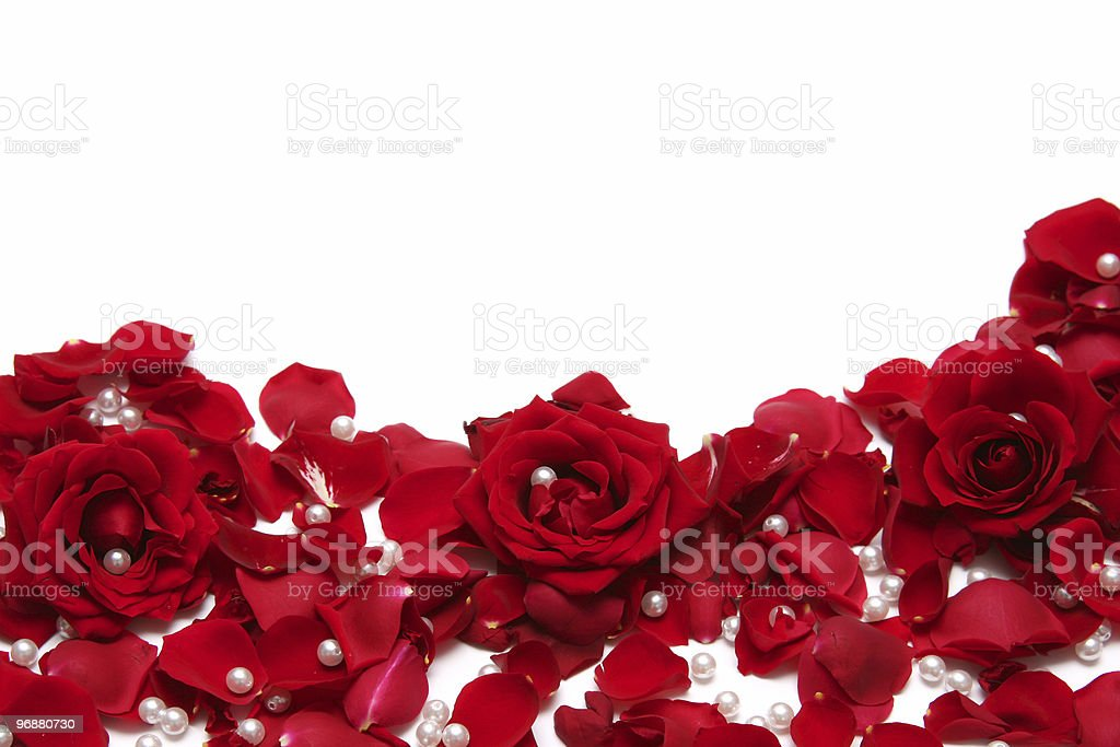 Red roses, petals and pearls scattered on a white surface royalty-free stock photo