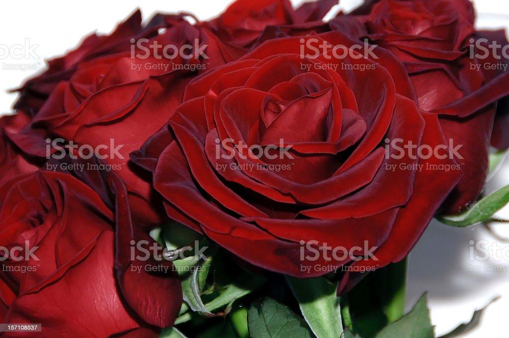Red rosas foto de stock libre de derechos