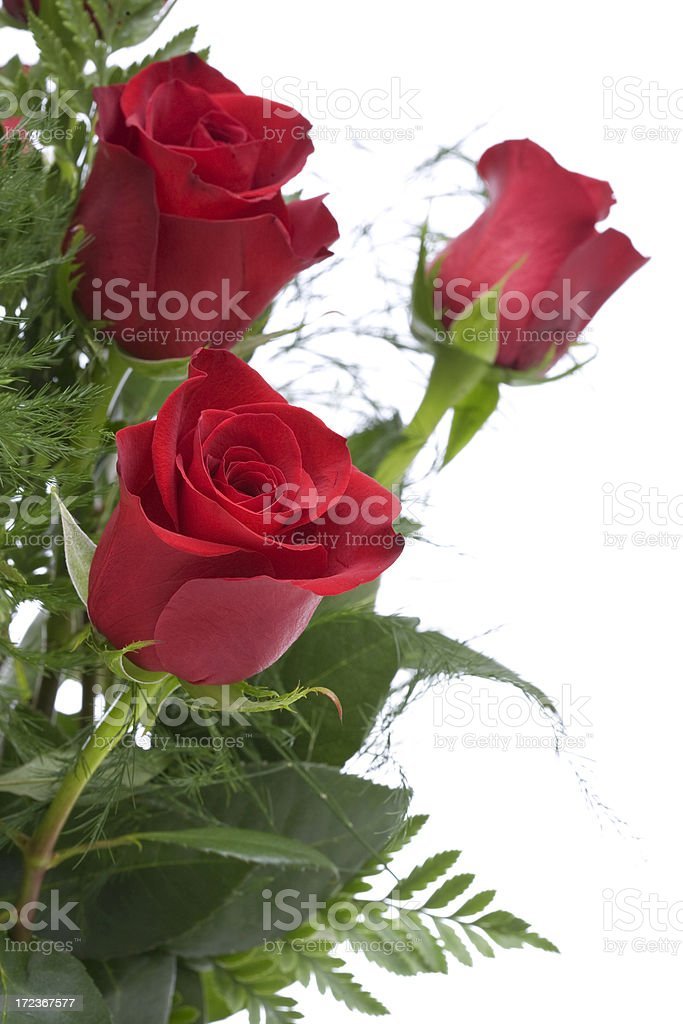 Red Roses (XL) royalty-free stock photo