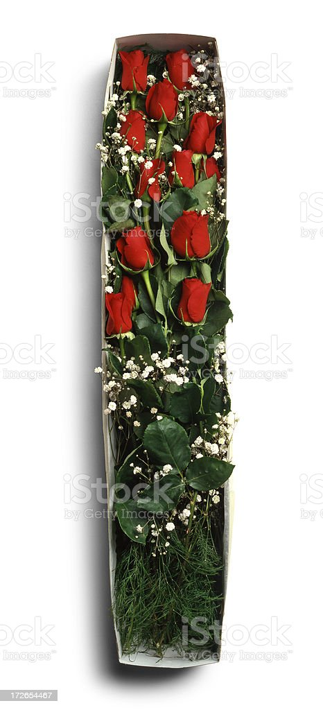 Red roses royalty-free stock photo