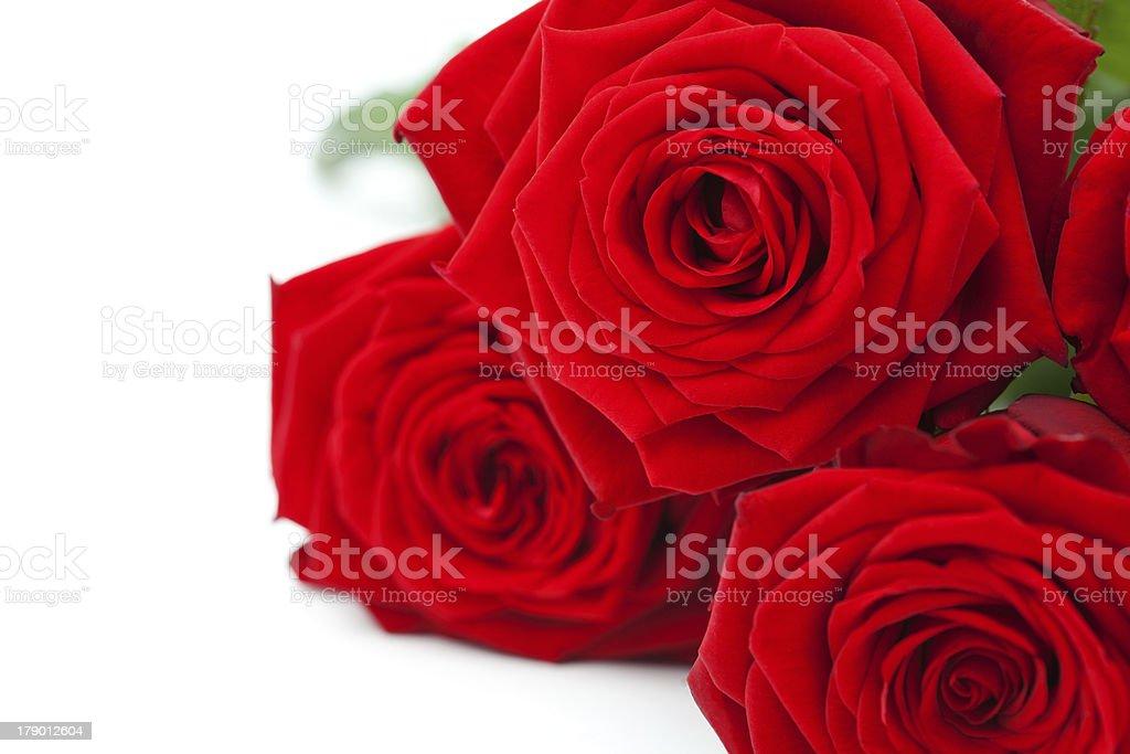 Rosas vermelhas foto royalty-free