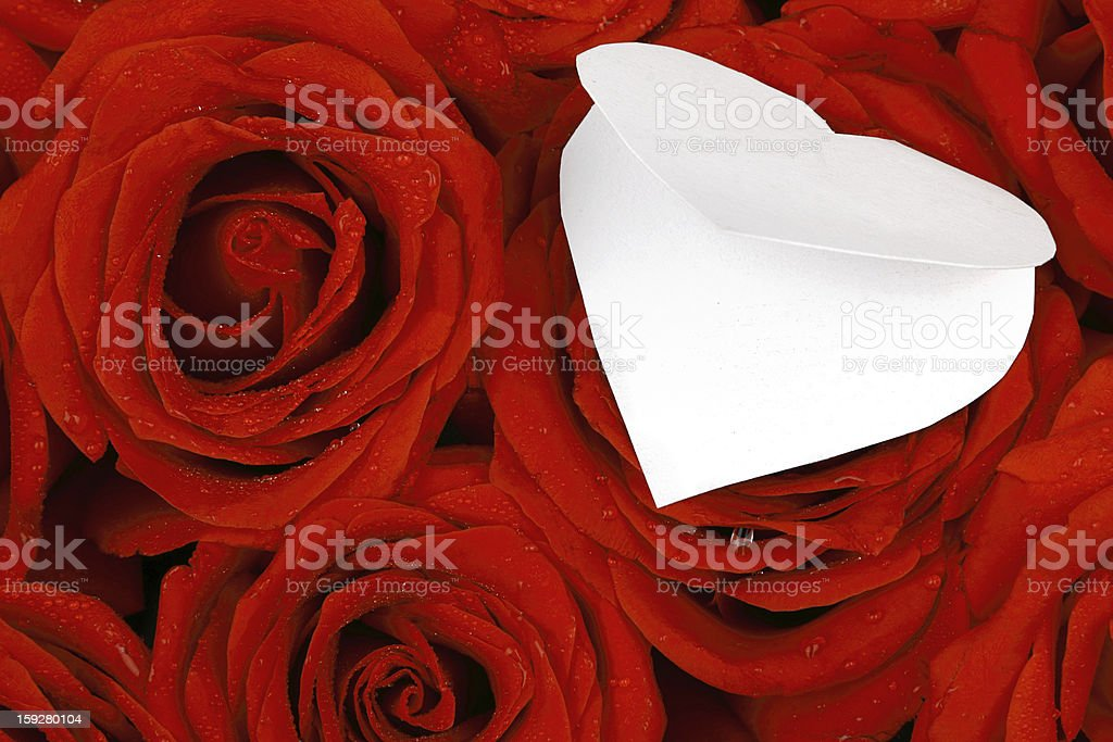 Red roses with a blank gift card royalty-free stock photo