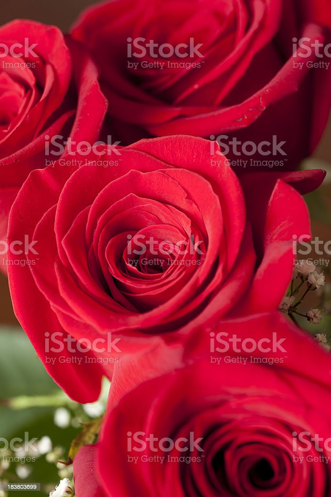 Red Roses with Focus on Petals stock photo
