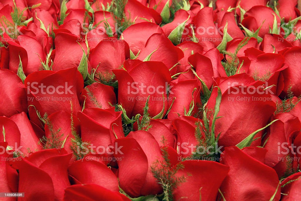 Red Roses with Green Stems stock photo