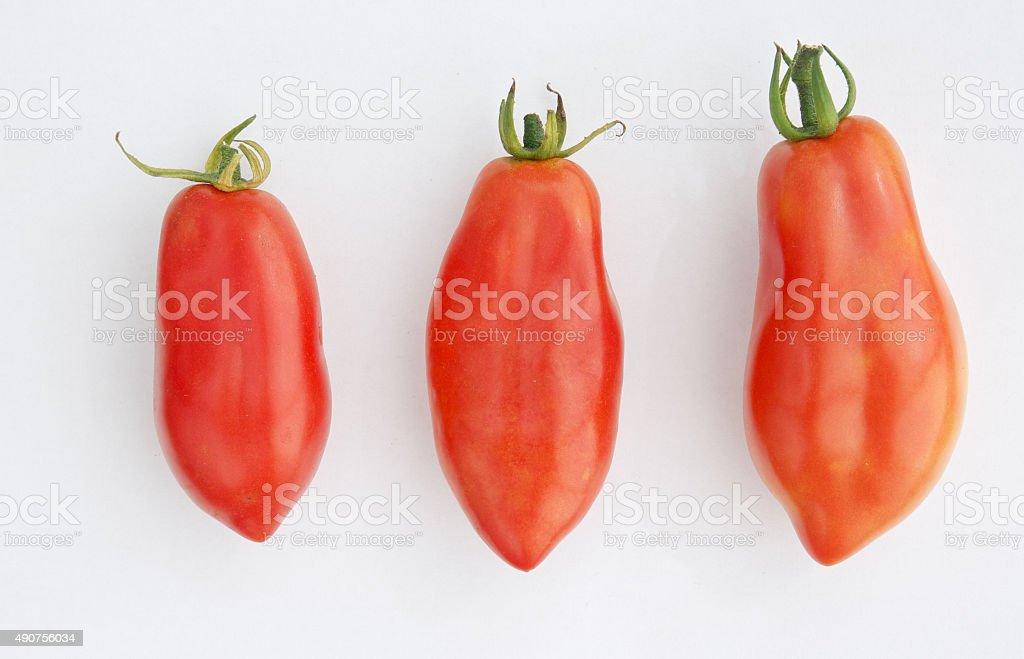Red San Marzano tomatos on a white background stock photo