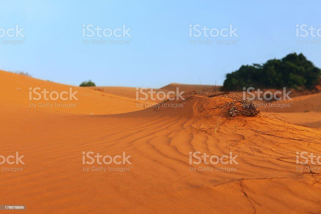 Red Sand Dunes. Sunset royalty-free stock photo