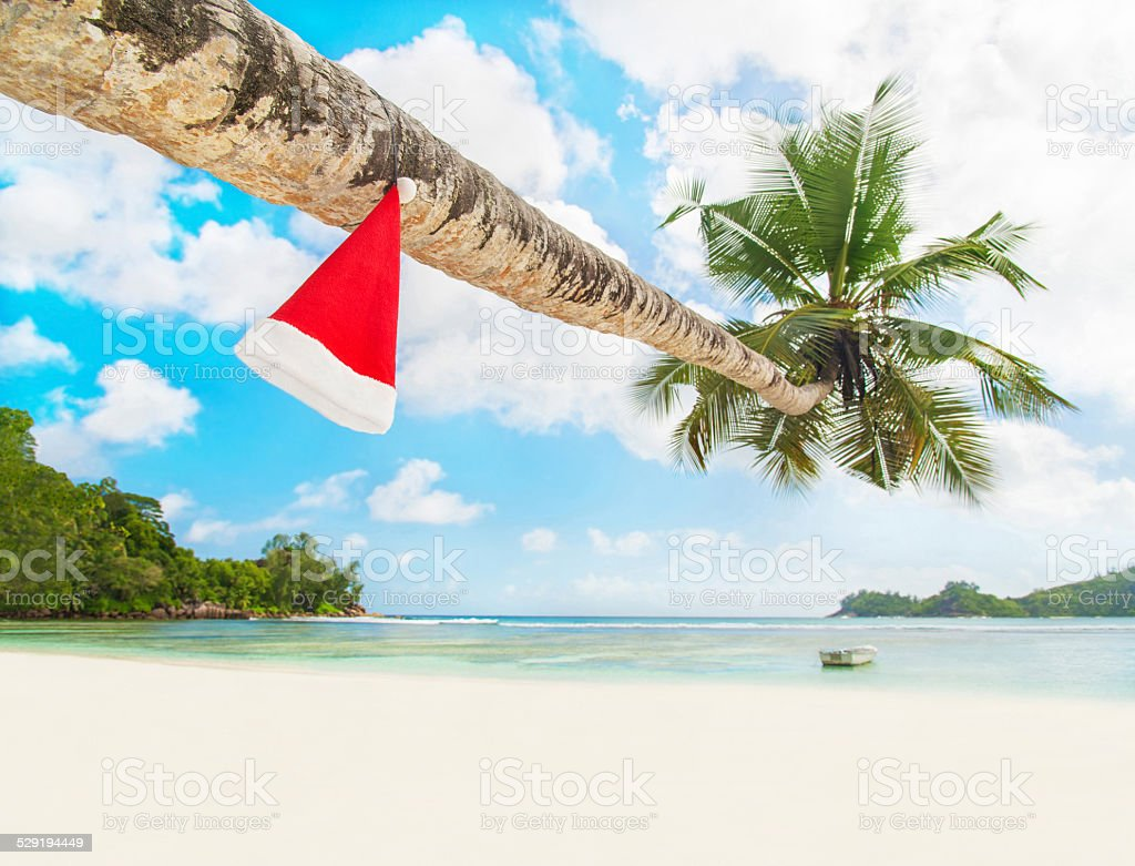 Red Santa hat on palm tree at exotic tropical beach stock photo