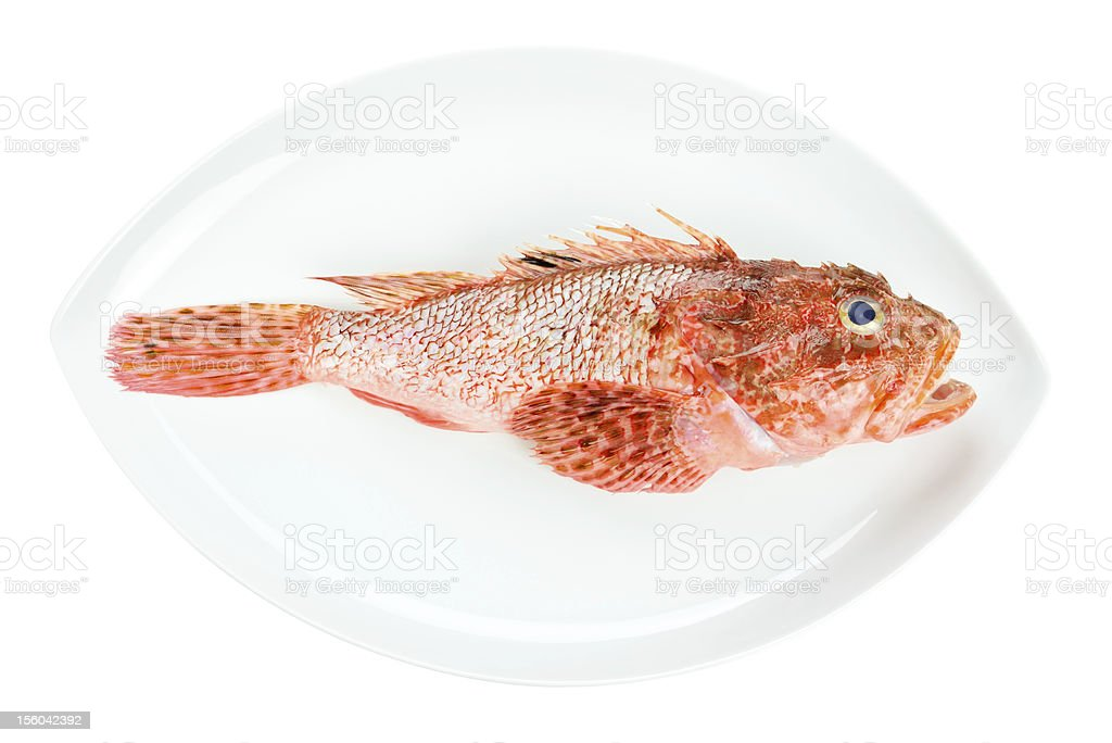 Red Scorpionfish prepared seafood oval dish isolated on white background royalty-free stock photo