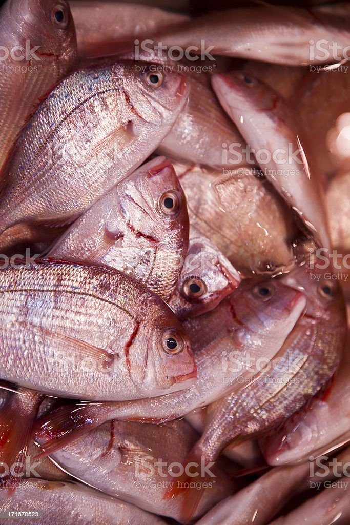 Red Sea Bream royalty-free stock photo