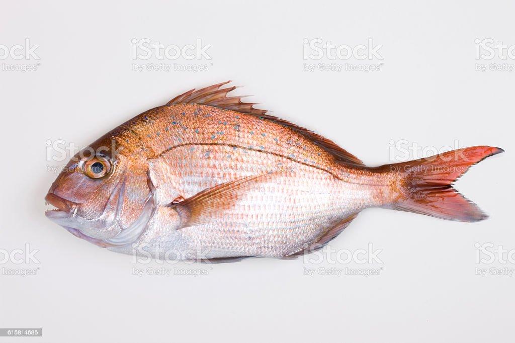 Red sea bream stock photo