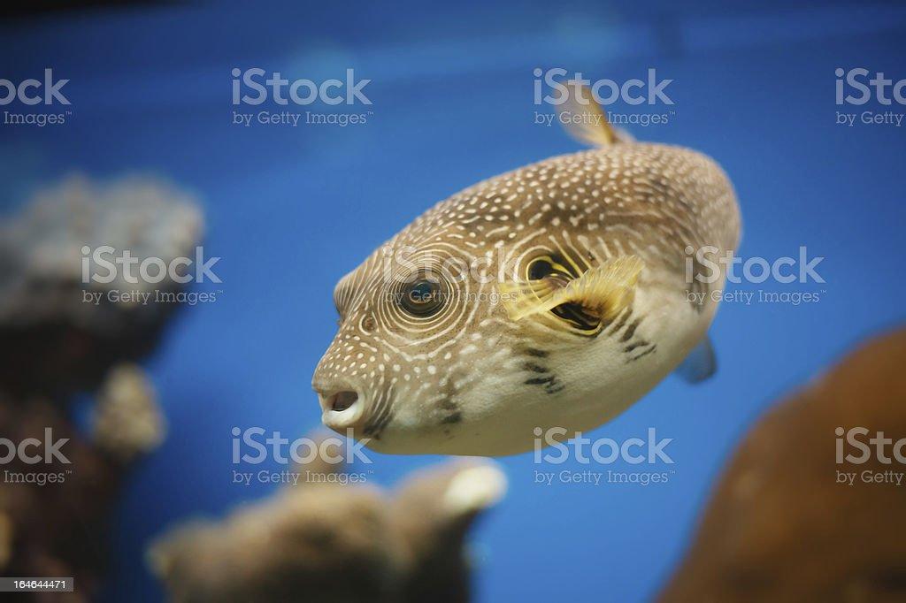 red sea fish royalty-free stock photo