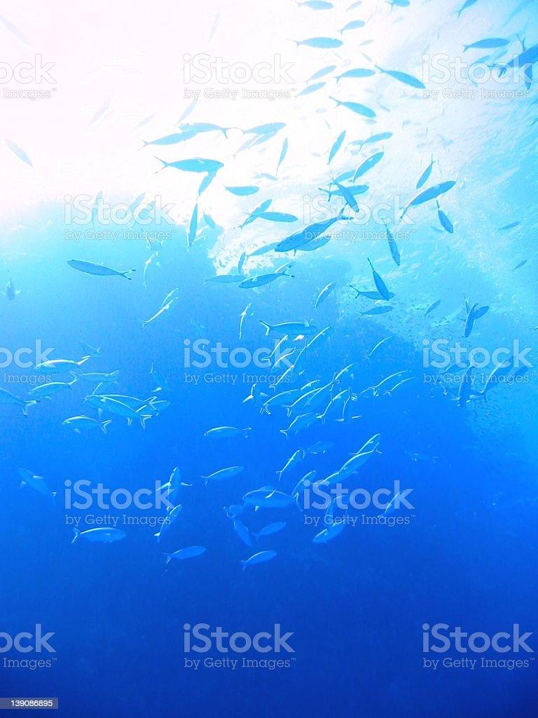 Red Sea Impressions #5 stock photo