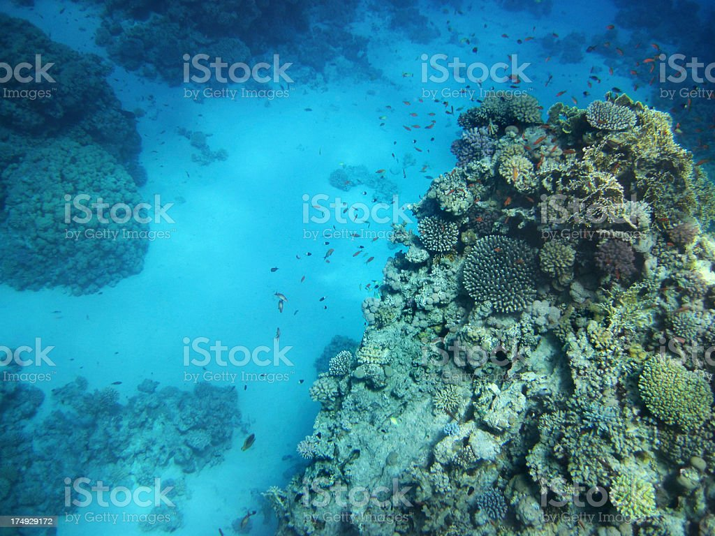 Red Sea life royalty-free stock photo
