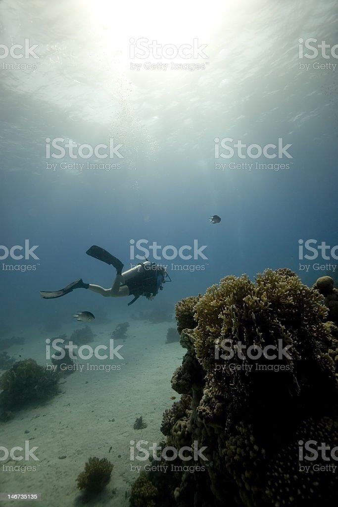 Plongeur sous-marin de la Mer Rouge photo libre de droits