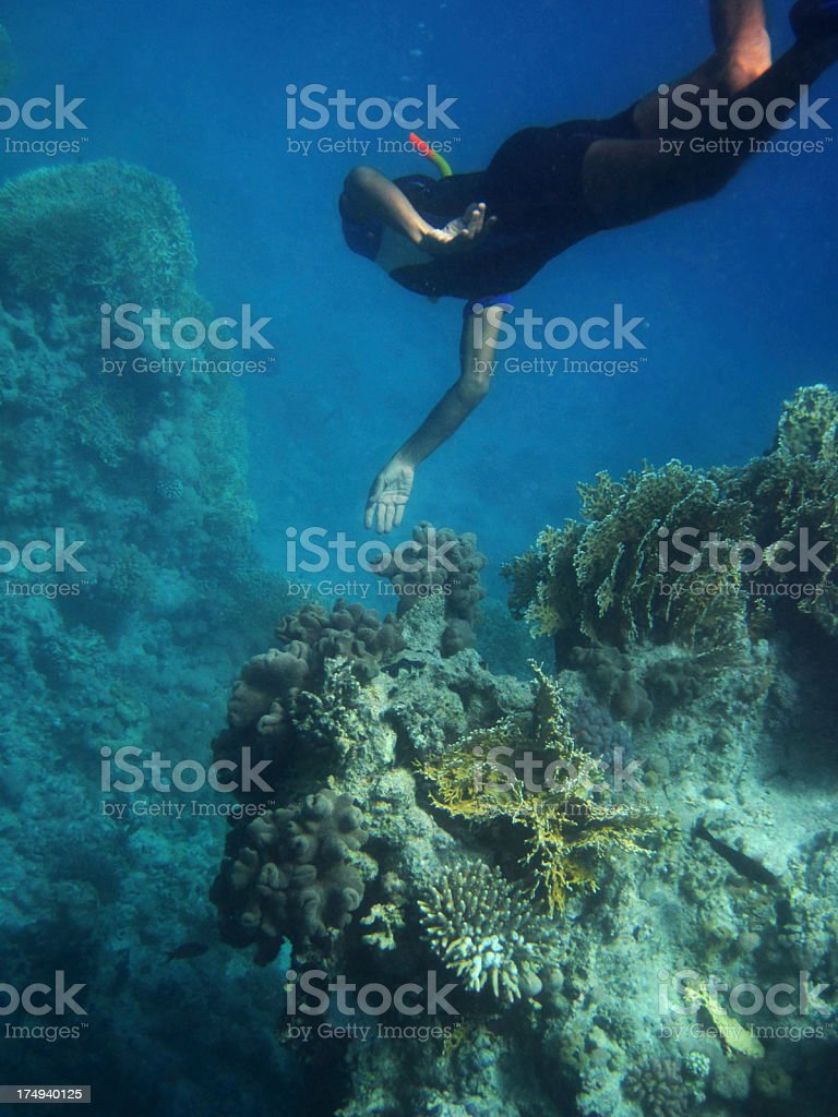 Red Sea snorkeler royalty-free stock photo