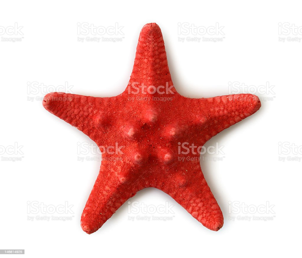 Red sea star royalty-free stock photo