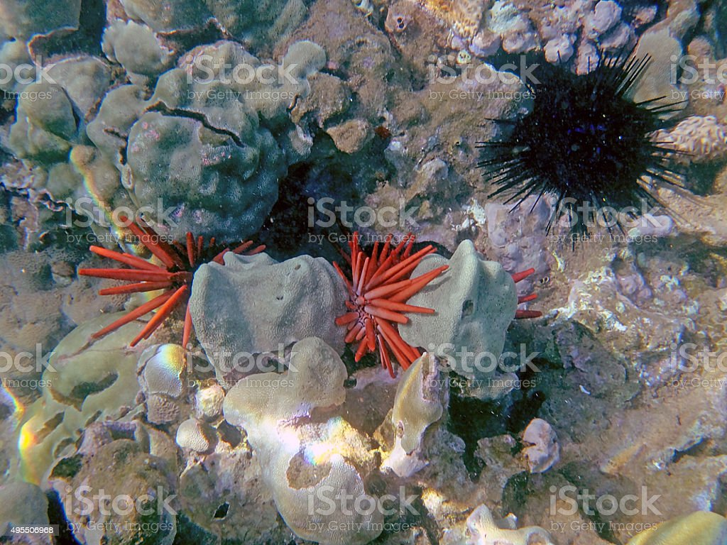Hawaiian sea life stock photo