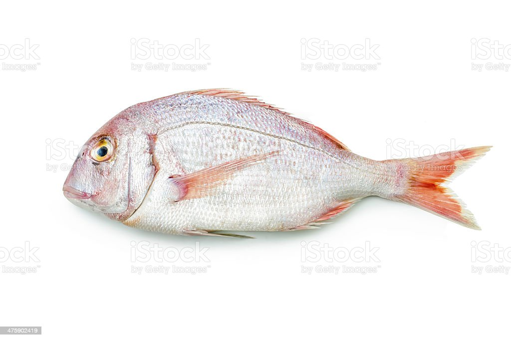Red seabream stock photo
