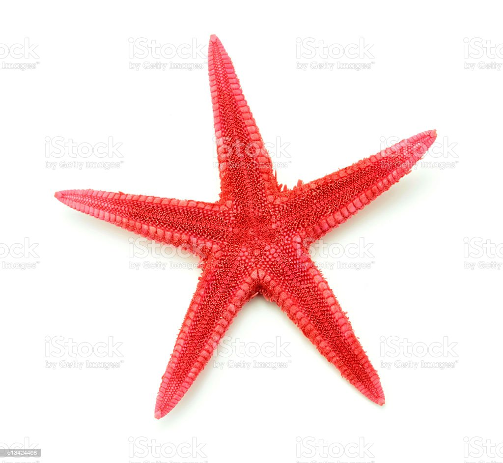 Red seastar ,close up image stock photo
