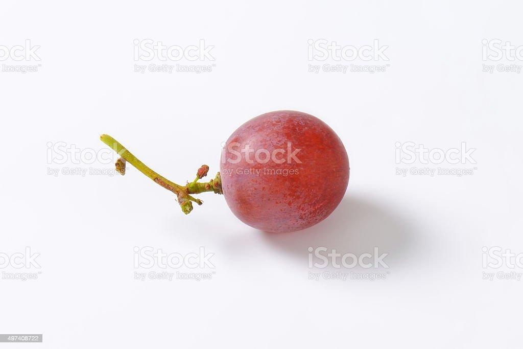 Red seedless grape stock photo