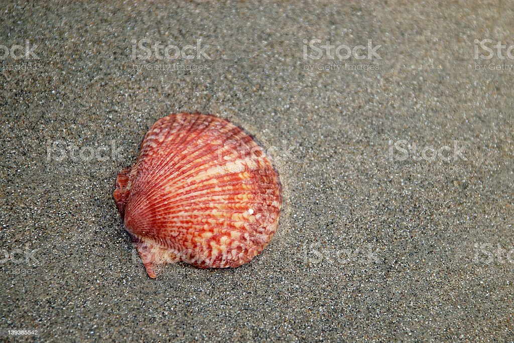Red shell royalty-free stock photo