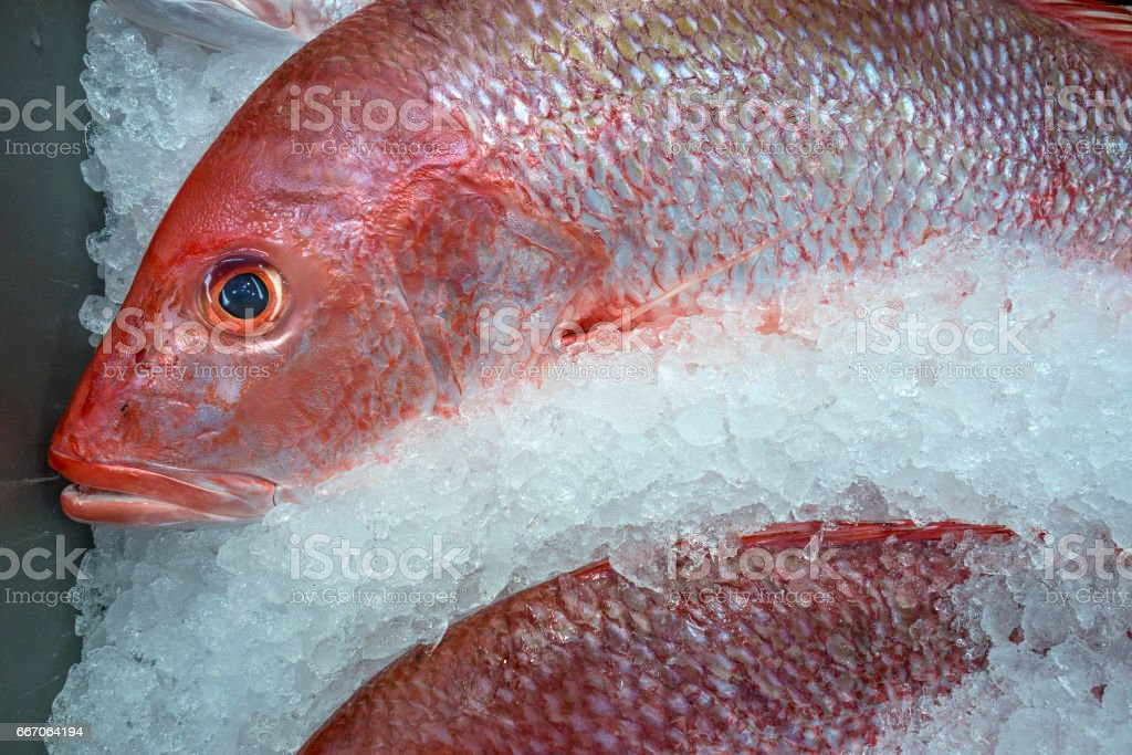 Red snapper and ice stock photo