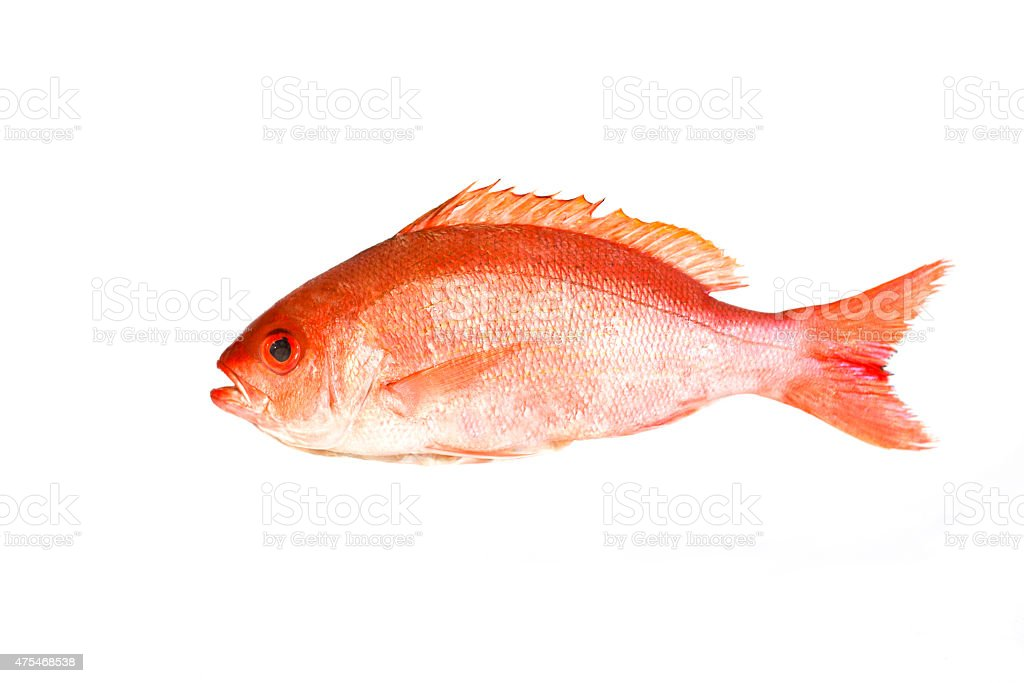 Red Snapper Fish Isolated On White stock photo