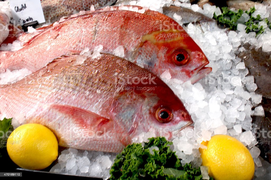Red snapper fish on ice at fresh market stock photo