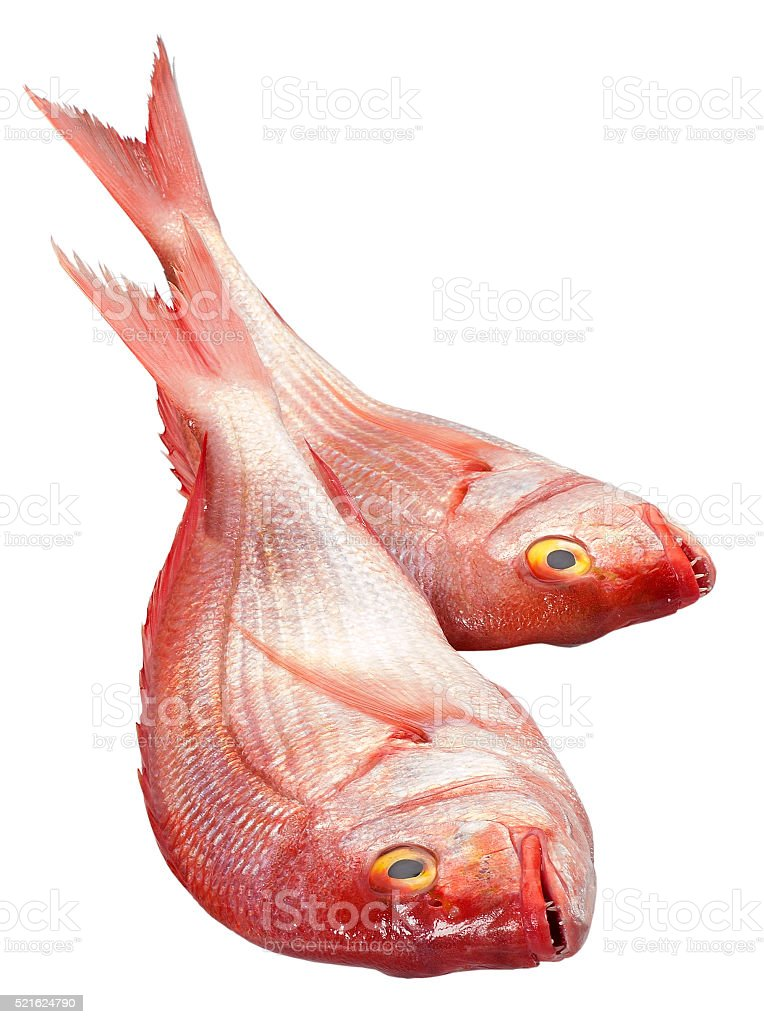 Red Snapper(+clipping path) stock photo