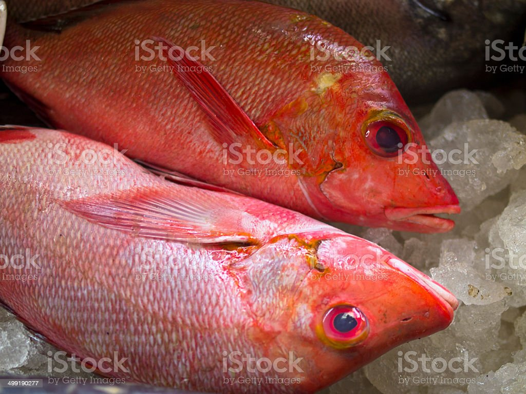 Red Snappers royalty-free stock photo