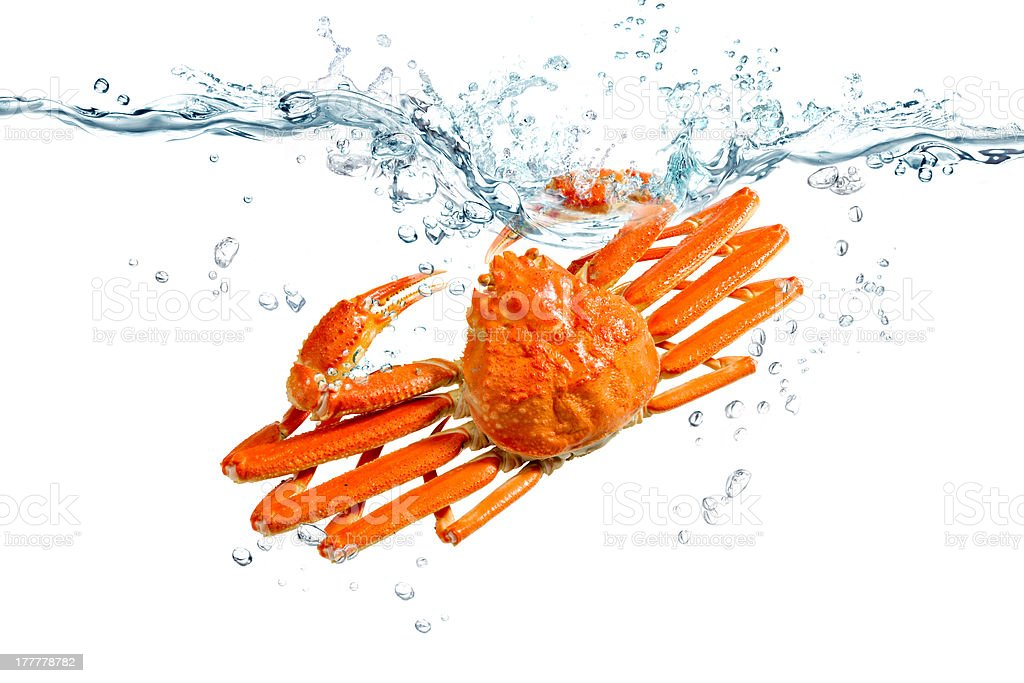 Red snow crab stock photo