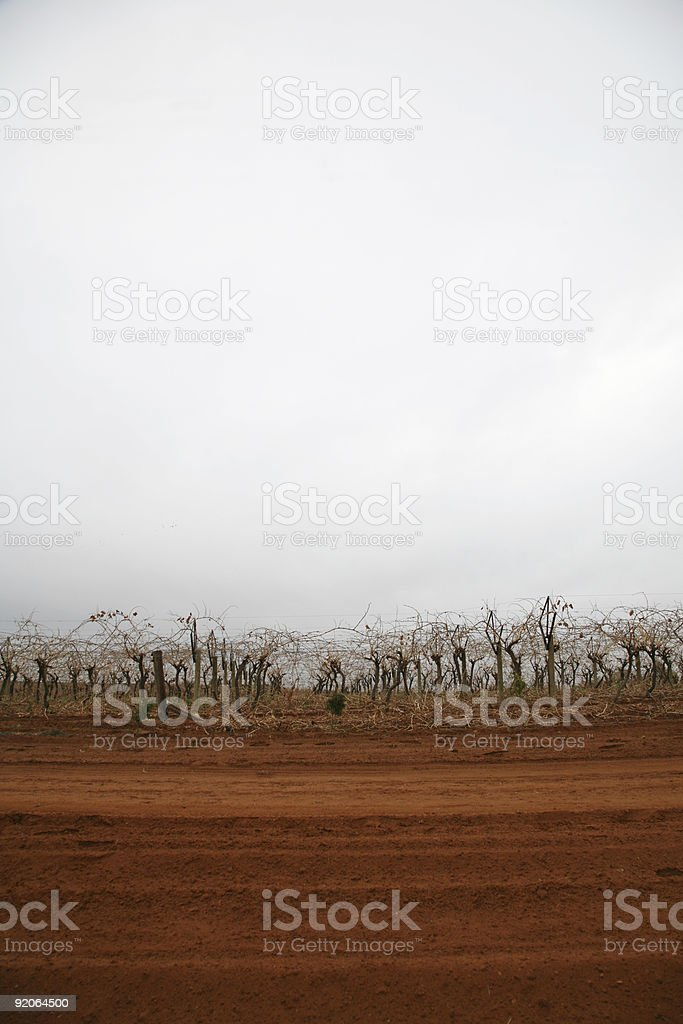 Red soil and winter vines royalty-free stock photo