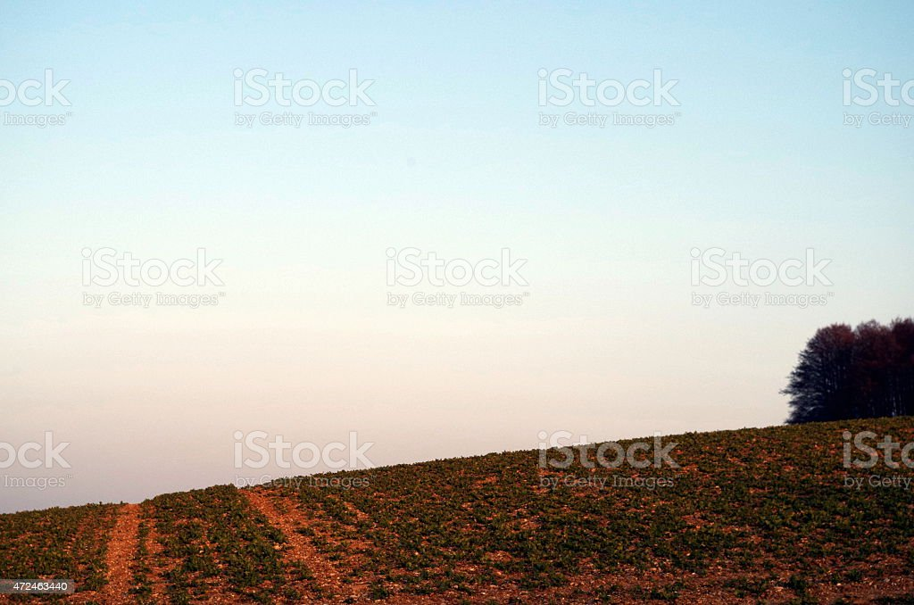 Red soil stock photo