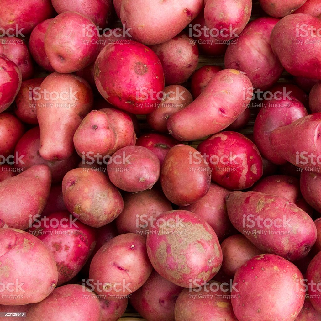 Red spring potatoes for sale at a farmer's market stock photo