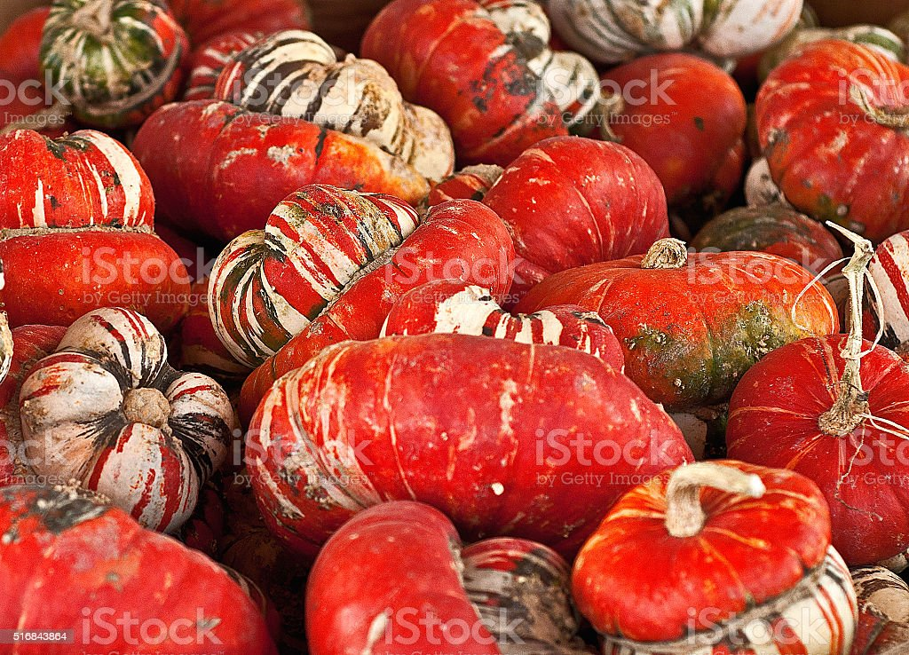 Red Squash, Turks Cap stock photo
