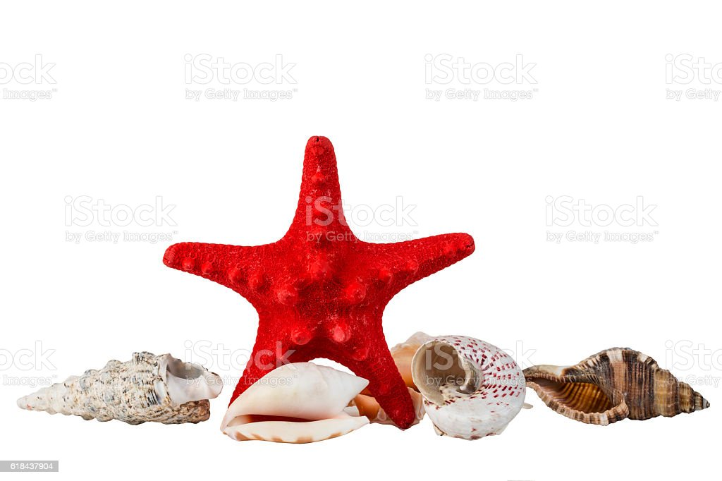 Red starfish and some sea shells isolated on white stock photo