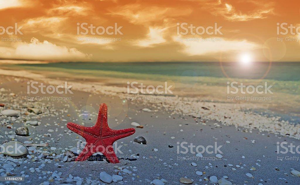 red starfish at dusk royalty-free stock photo