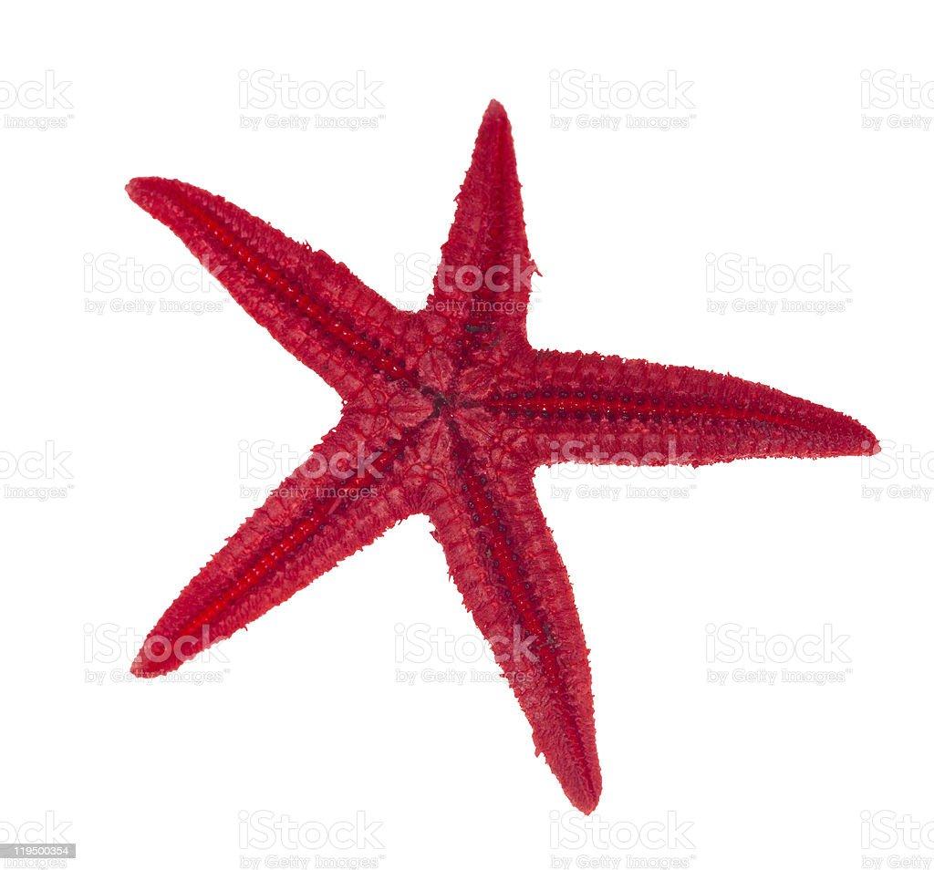 red starfish isolated on white stock photo