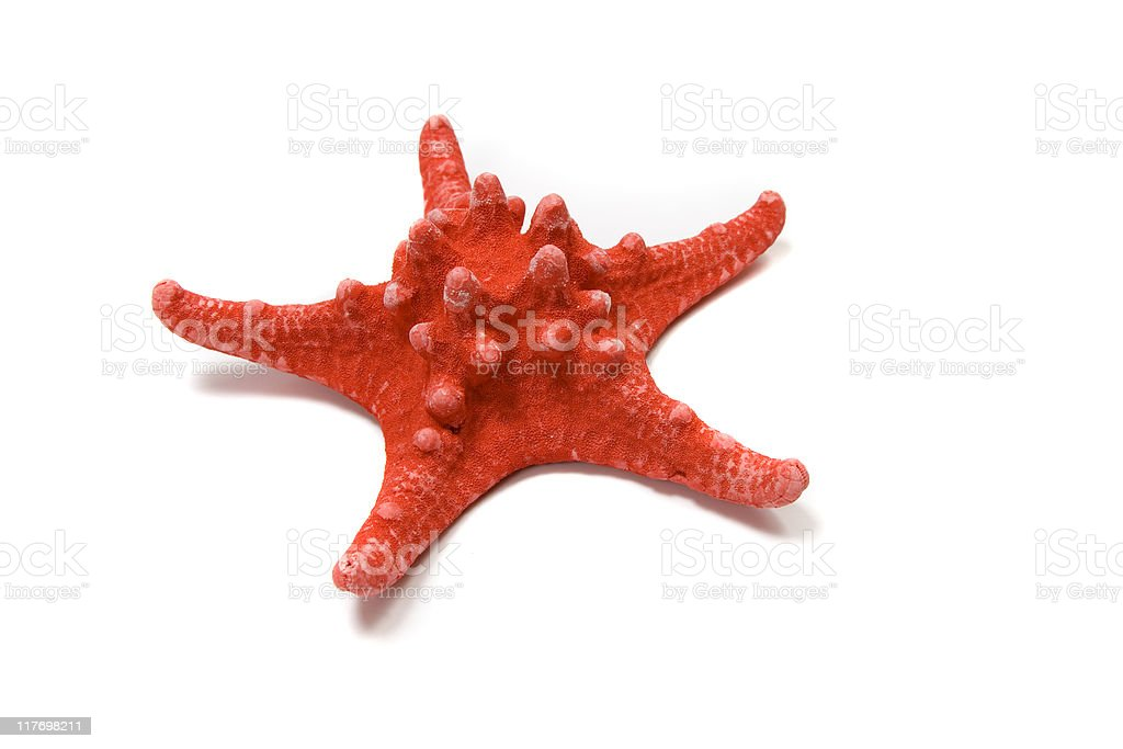 A red starfish on a white isolated background stock photo